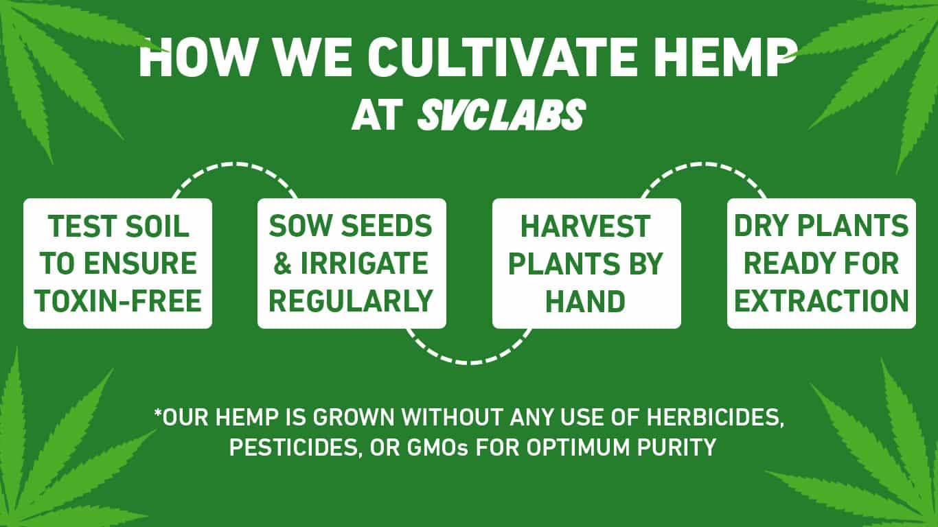 how we cultivate hemp